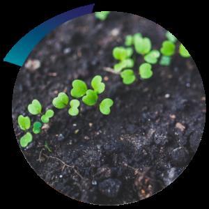 Earthwize-Soil-remediation